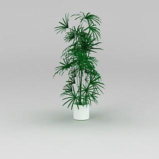 室内绿色盆景3d模型