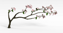 樱花树枝模型3d模型