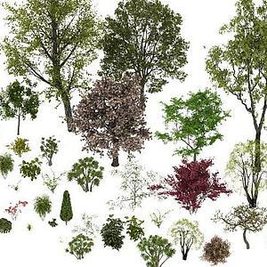 北方树种模型