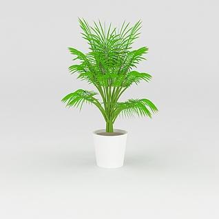 室内绿植盆栽3d模型