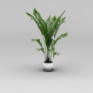 散尾葵3d模型