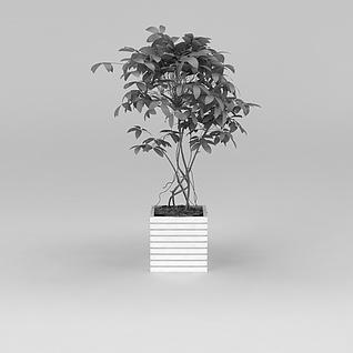 庭院绿植盆栽3d模型