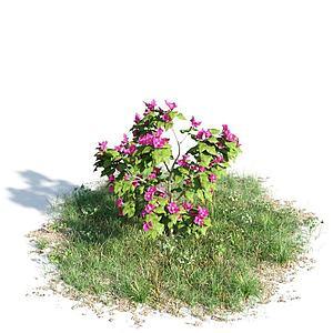3d开花灌木模型