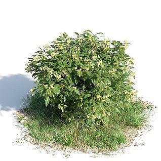 灌木3d模型3d模型