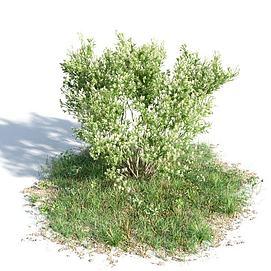 园林景观灌木3d模型