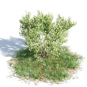 园林景观灌木模型