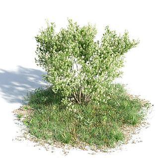 园林景观灌木3d模型3d模型