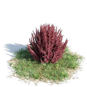 3d公园观赏植物模型