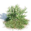 观赏灌木模型