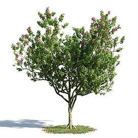 园林景观小乔木模型
