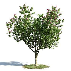 3d<font class='myIsRed'>园林</font>景观小乔木模型