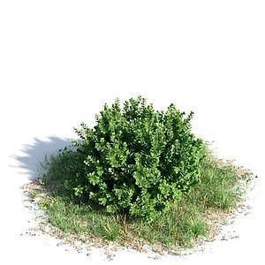 3d景观灌木模型