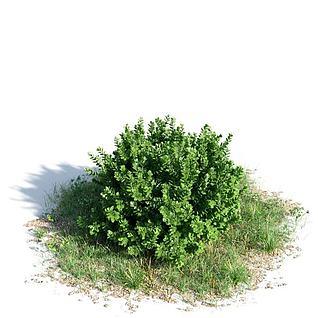 景观灌木3d模型3d模型