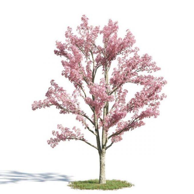 园林景观乔木3d模型