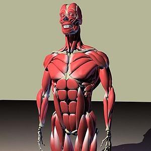 3d<font class='myIsRed'>人体</font>骨骼肌肉图模型
