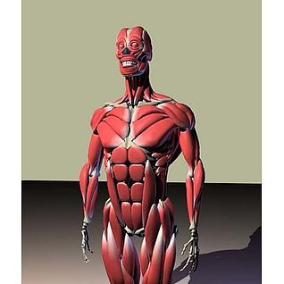 人体骨骼肌肉图3d模型
