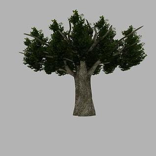 假树3d模型