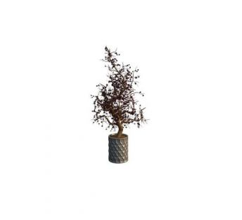 庭院植物盆栽