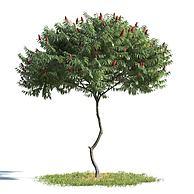 公园小树3D模型3d模型