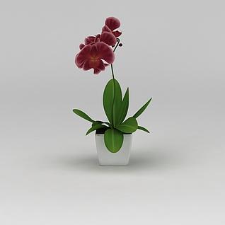 兰花花卉3d模型