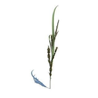 花草植物3d模型
