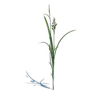小草3d模型