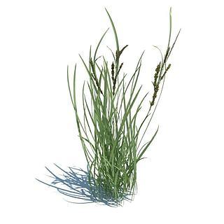 <font class='myIsRed'>植物</font>花草3d模型