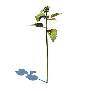 单株紫花野芝麻3d模型