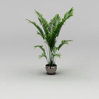 散尾葵绿植3d模型