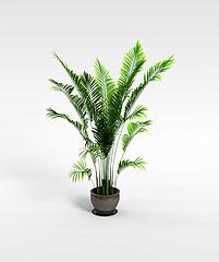 散尾葵绿植模型3d模型