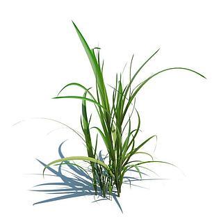 香茅草3d模型