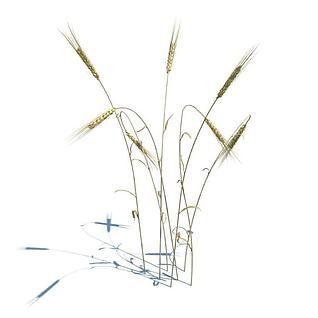 麦子模型3d模型