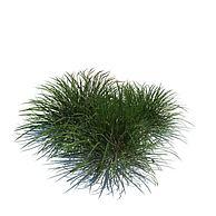 绿草3D模型3d模型