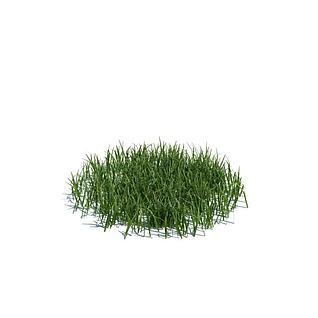 绿草3d模型