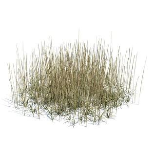 枯黄的草3d模型