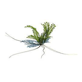 铁角蕨3d模型