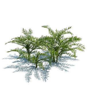 植物花草3d模型