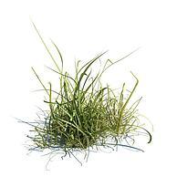 草3D模型3d模型