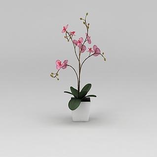 蝴蝶兰花卉3d模型