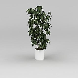 观叶植物盆栽3d模型3d模型
