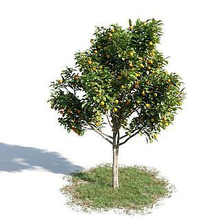 橘子树3d模型3d模型