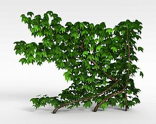 3d爬山虎绿植模型
