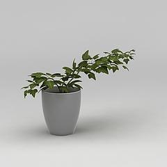 室内花盆绿植模型3d模型