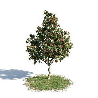 园林植物3d模型3d模型