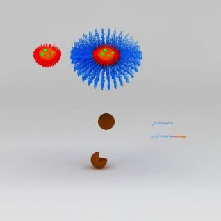 胶束纳米颗粒3d模型