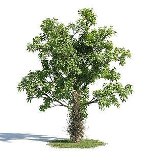 公园绿树模型