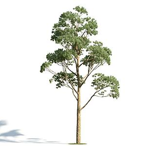 3d<font class='myIsRed'>园林</font>乔木模型