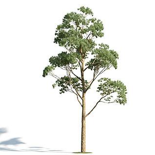 园林乔木3d模型3d模型