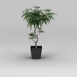 庭院小树3d模型