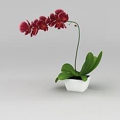 蝴蝶兰盆栽3D模型3d模型